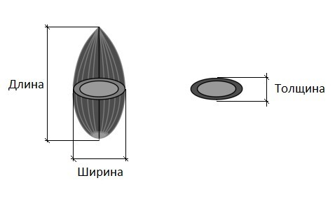 Характерные размеры семянки подсолнечника