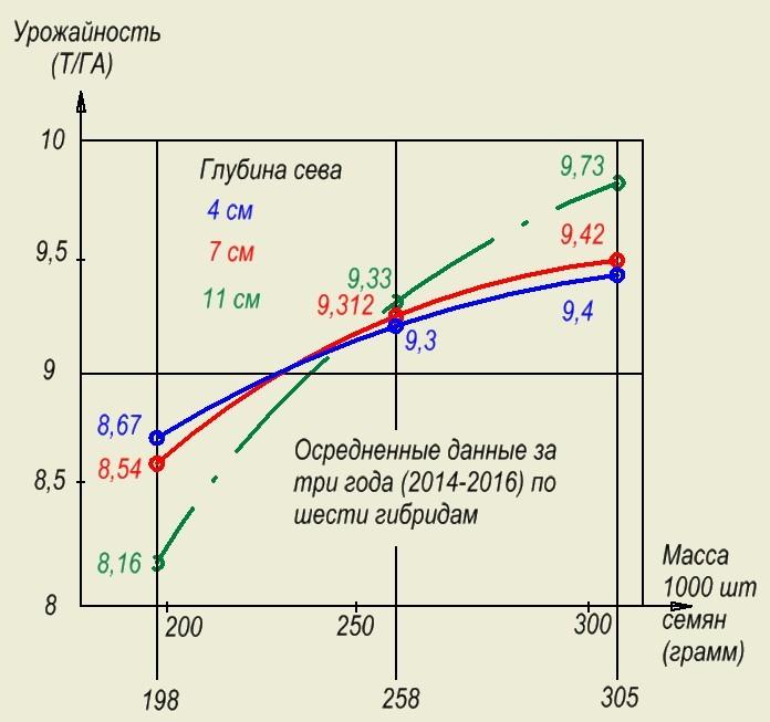 Зависимость урожайности от массы 1000шт. семян кукурузы и глубины сева