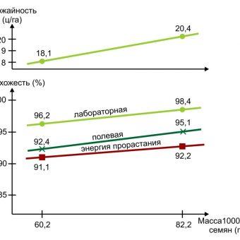 Зависимость урожайности от массы 1000 шт. семянок одного и того же размера (ширина и длина) хорошо известна.