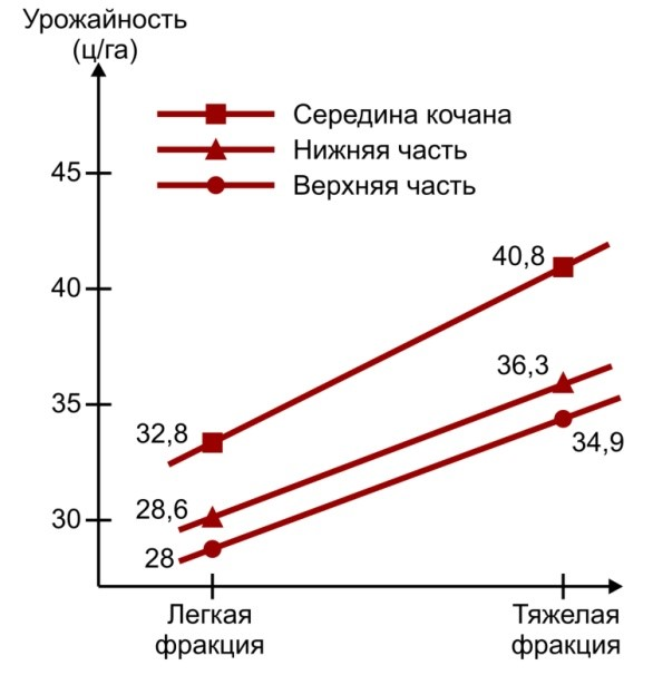 Зависимость урожайности кукурузы от плотности семян и места их расположения в початке (Макрушин М.М., 1994 г.)