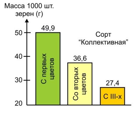 Влияние материнской разно качественности на массу 1000 шт. (г) семян яровой пшеницы (Н.В. Новицкая, 2008 г.).