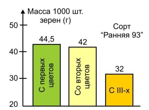 Рис. 2. Влияние материнской разно качественности на массу 1000 шт. (г) семян яровой пшеницы (Н.В. Новицкая, 2008 г.).