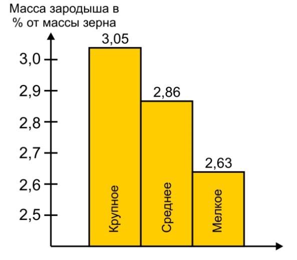 Рис. 8. Сравнение относительной массы зародыша (%) у зерен пшеницы разной величины [5].