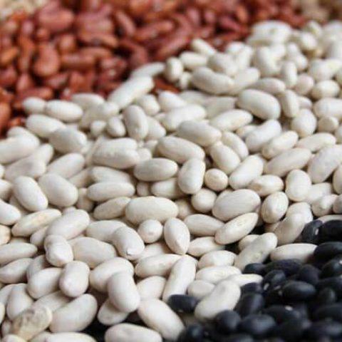 Фасоль – ведущая бобовая культура