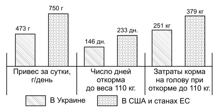 Эффективность откорма свиней в США и странах ЕС по сравнению с эффективностью откорма в Украине