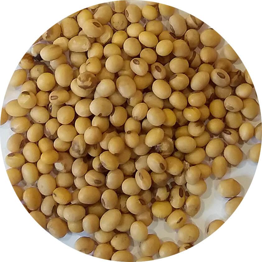 Тяжелая фракция сои выделенная на Пневсмовибростоле, семенной материал подготовленный к посеву.